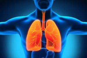 Дыхательные пути (верхние и нижние)