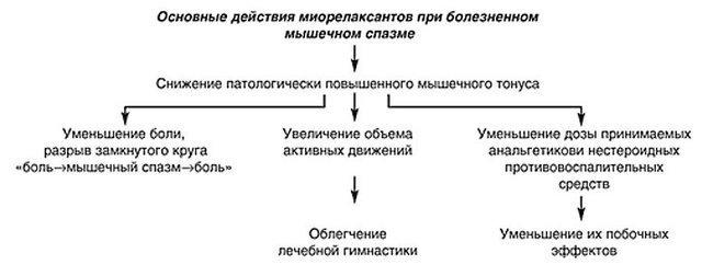 Схема действия миорелаксантов для упрощённого понимания принципа работы
