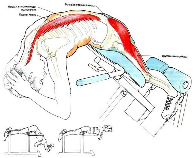Как гиперэкстензия воздействует на конкретные мышцы