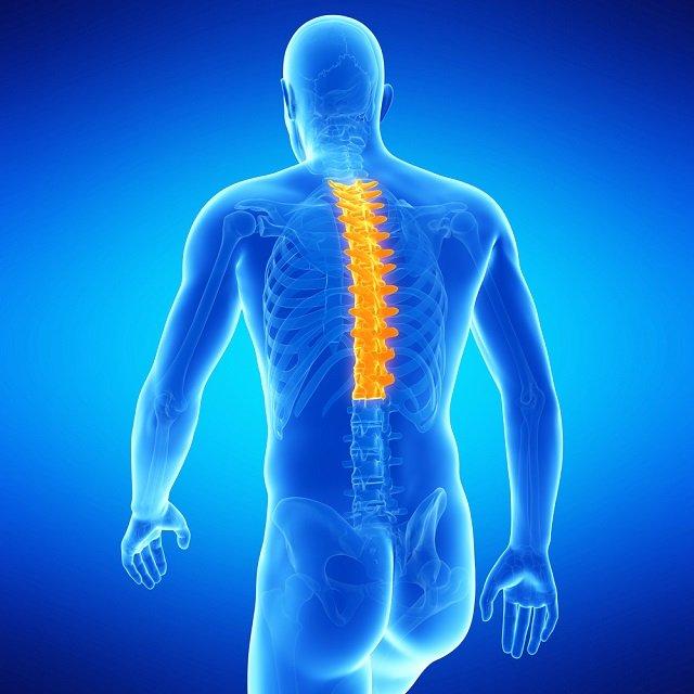 Грудной отдел – самый неподвижный и наименее уязвимый отдел позвоночника при столкновении с остеофитом