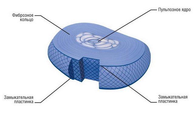 Строение межпозвоночного диска