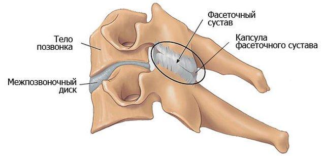 Расположение фасеточного сустава