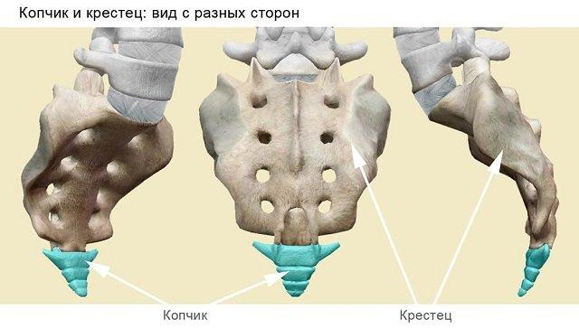 Копчиковый отдел – отдел рудиментарной кости, которая, тем не менее, сохраняет свою важность