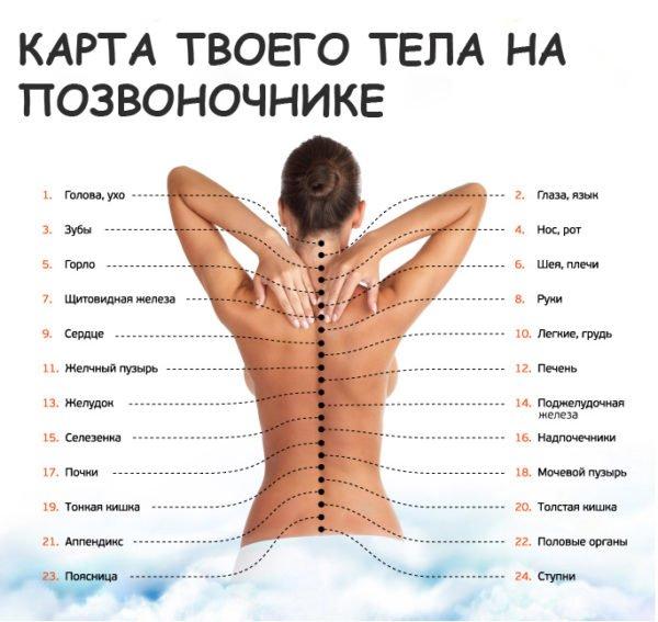 Узнай, как связан позвоночник с другими органами. Причина болей в спине может оказаться сюрпризом