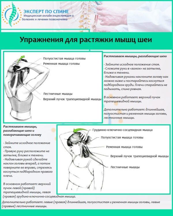 Упражнения для растяжки мышц шеи