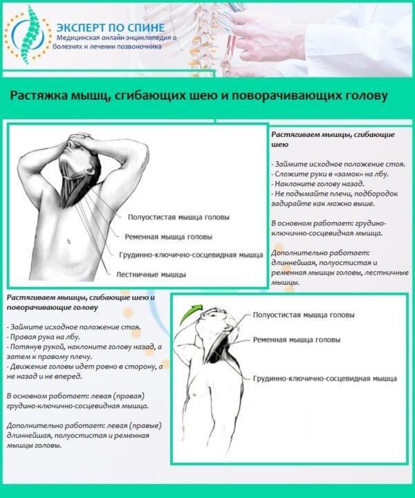 Растяжка мышц, сгибающих шею и поворачивающих голову