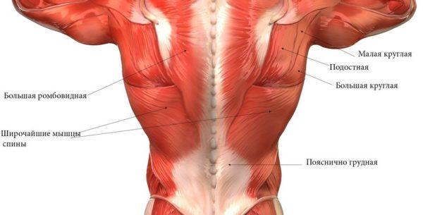 Мышечный корсет спины