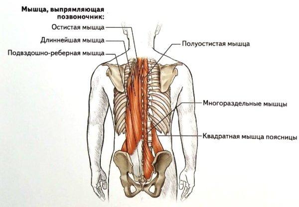 Люмбалгия возникает на фоне ослабленных мышц спины