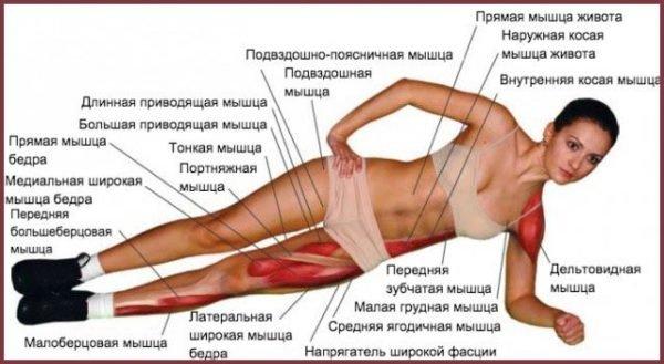 Мышцы, которые участвуют в боковой «планке»
