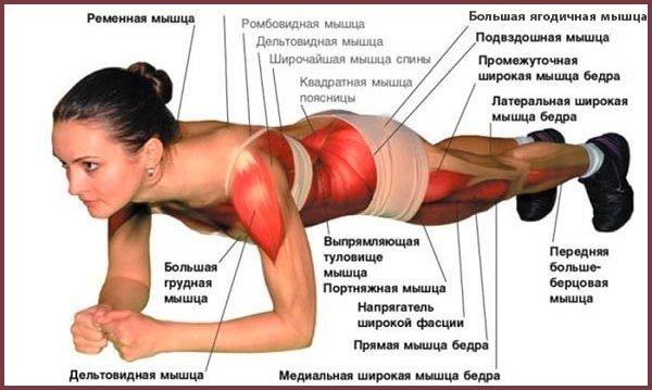 Мышцы, которые участвуют в классической «планке»