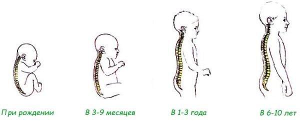 Наиболее активно формирование физиологических изгибов позвоночника идет в первые 6-7 лет жизни ребенка