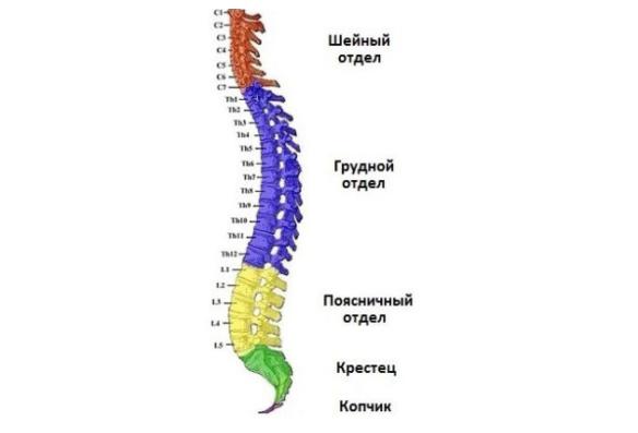 Корешковый синдром может возникнуть в любом отделе позвоночника