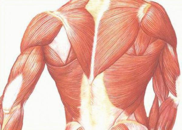 Дистрофические поражения мышечной системы тоже приводят к деформациям позвоночного столба