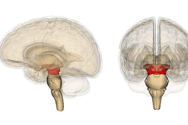 Диэнцефальный синдром — мощный удар по ЦНС из-за дисфункции гипоталамуса