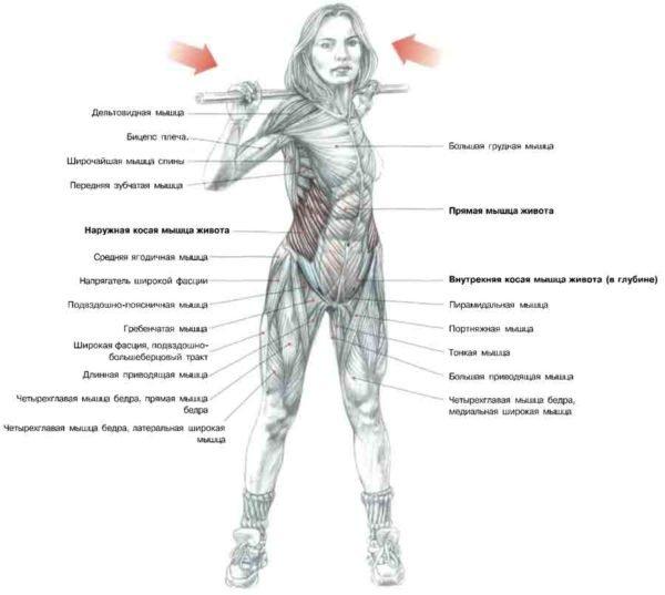 Какие мышцы задействованы во время упражнений