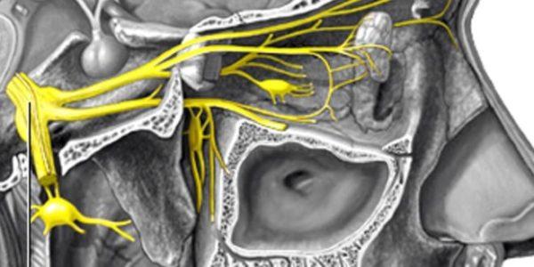 При неврите нарушается структура тройничного нерва