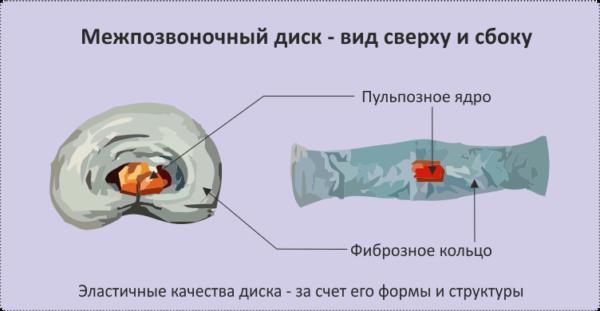 Сложность строения межпозвонкового диска обусловлена специфическим комплексом выполняемых им функций