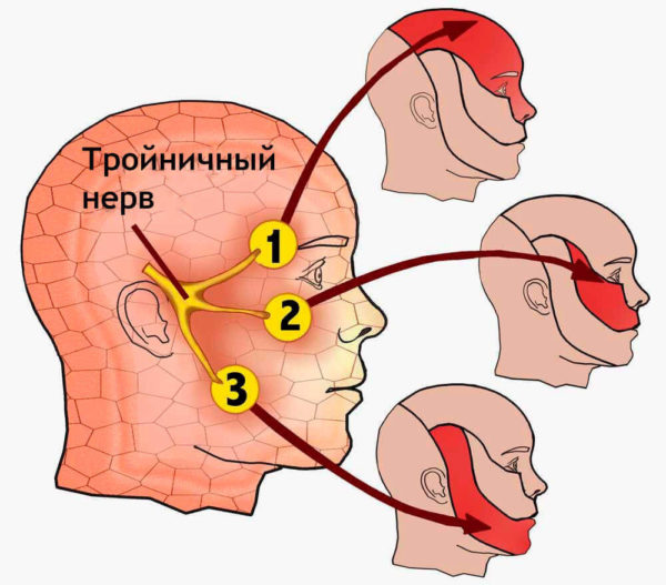 Тройничный нерв отвечает за чувствительность лицевой зоны