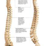 Болит шея сзади и отдает в голову: причины, диагностика и лечение