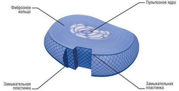 Замыкательная пластинка является самым уязвимым местом межпозвоночного диска