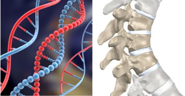 Основной причиной болезни специалисты считают генетическую предрасположенность
