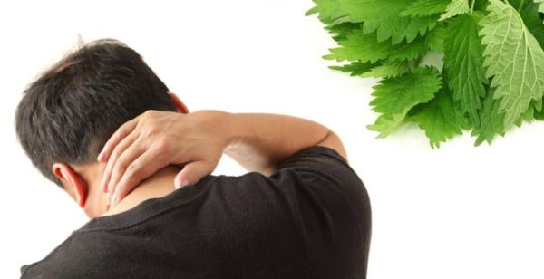 Лечение крапивой при шейном остеохондрозе