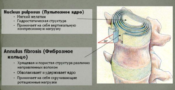 Функции межпозвоночного диска