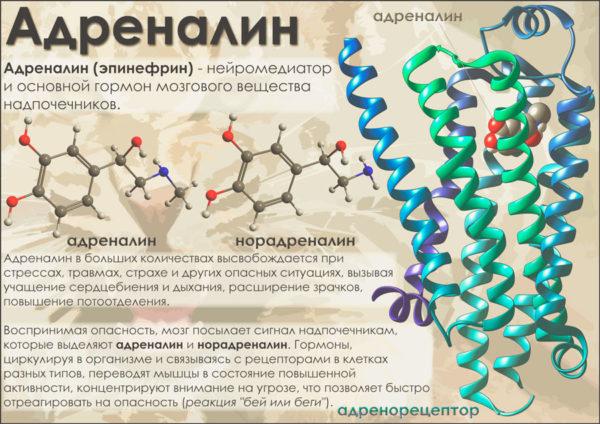 Адреналин гормон