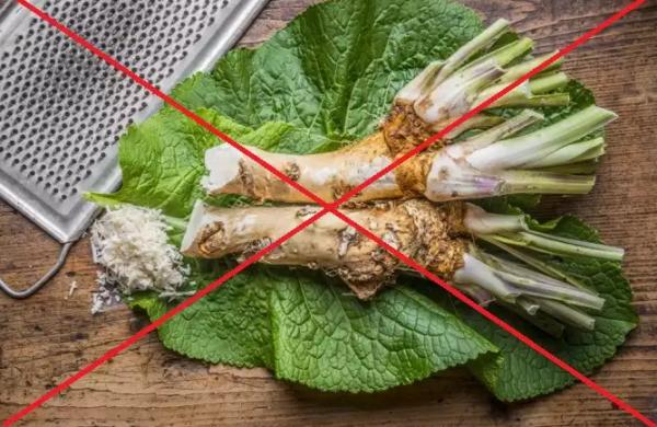 Лечение хреном не проводят при аллергических реакциях на растение