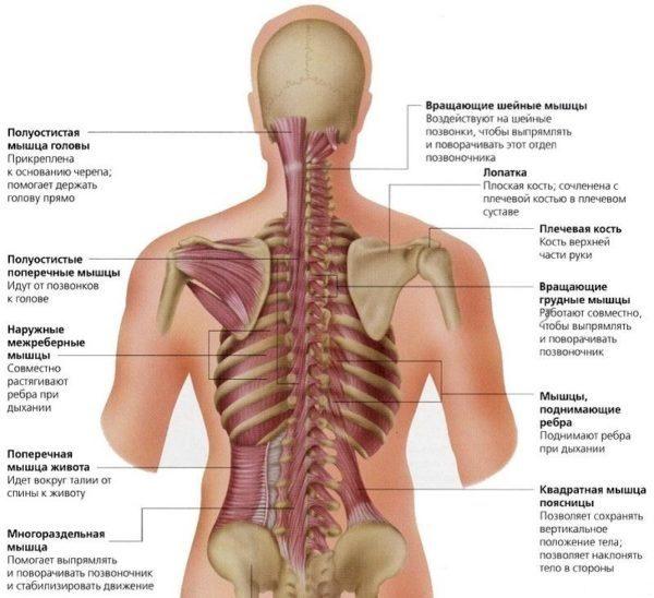 Любые повреждения позвоночника механического характера становятся причиной появления боли и мешают полноценной жизни