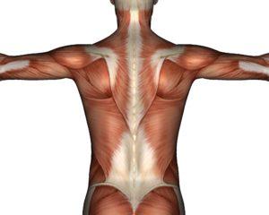 Ослабление мышечного корсета