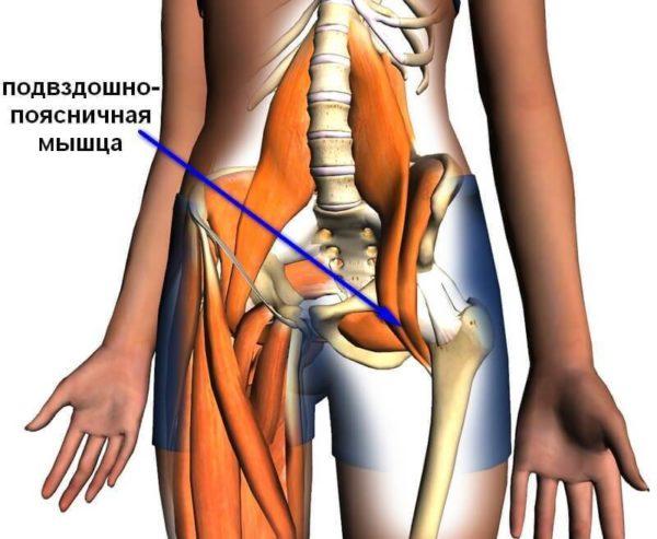 Подвздошно-поясничная мышца изнутри