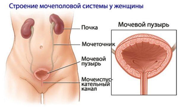 Разрыв мочевого пузыря сопровождается характерными симптомами