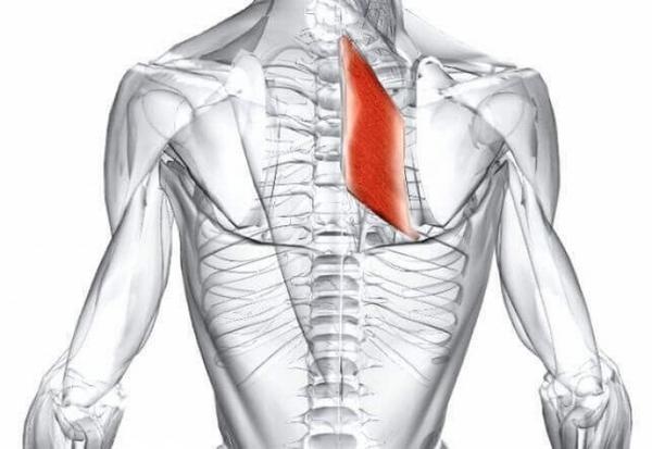 Ромбовидная мышца спины