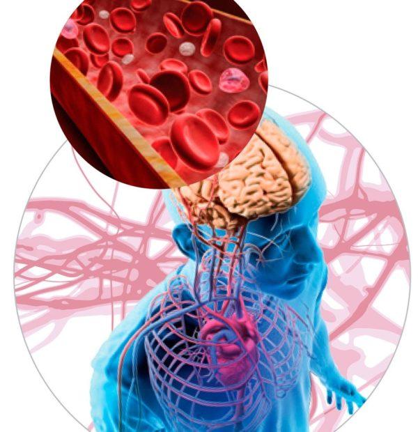 Препарат может назначаться для нормализации кровообращения в сосудах головного мозга