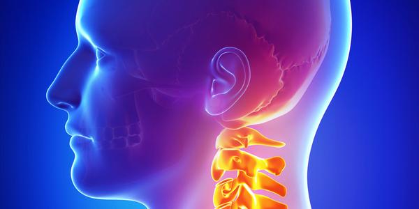 Шейный отдел позвоночника считается наиболее подвижным и, к тому же, позвонки в нем более хрупкие, чем в других частях хребта