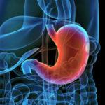 Желудок (кардиальный отдел и тело желудка)