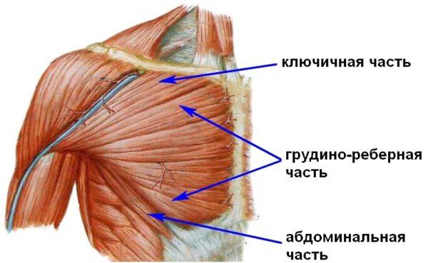 Причиной невралгии может являться повреждение мышечных тканей в верхней части тела