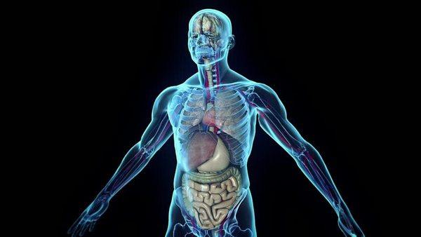 В зависимости от области, в которой был поврежден спинной мозг, перестают нормально функционировать конкретные внутренние органы