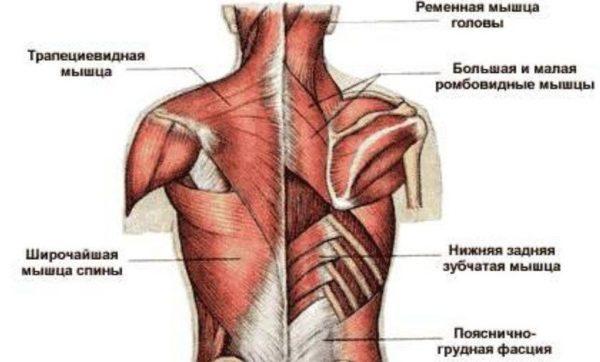 Острая фаза заболевания характеризуется двигательными расстройствами, обусловленными поражением мышц спины