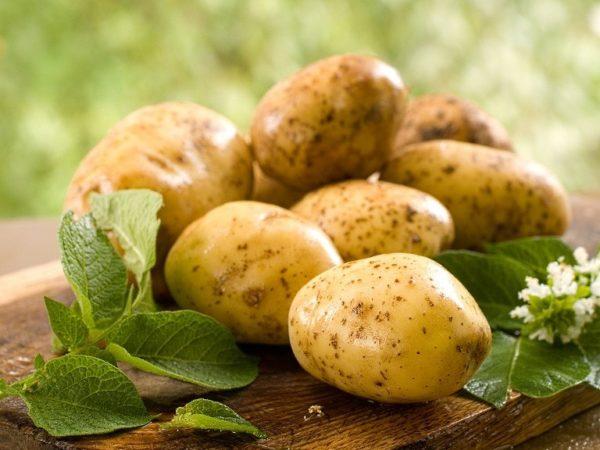 Сырой картофель хорошо снимает воспаление и боль